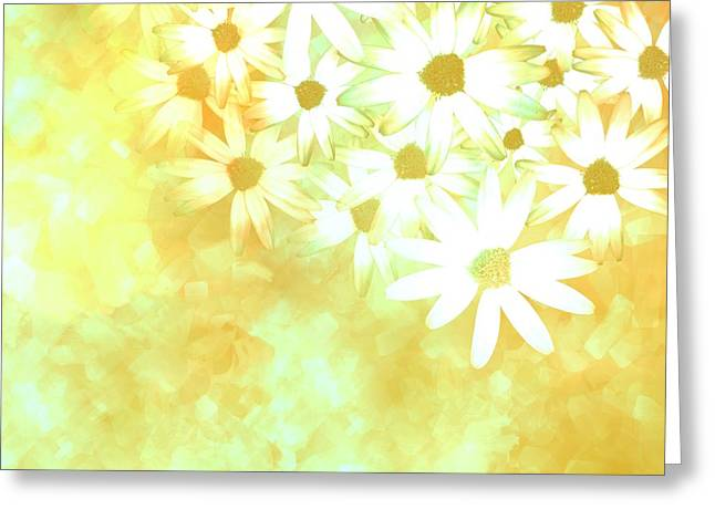 nature - flowers- White Daisies -floral art Greeting Card by Ann Powell
