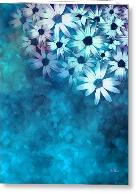 nature - flowers- White Daisies on Blue  Greeting Card by Ann Powell