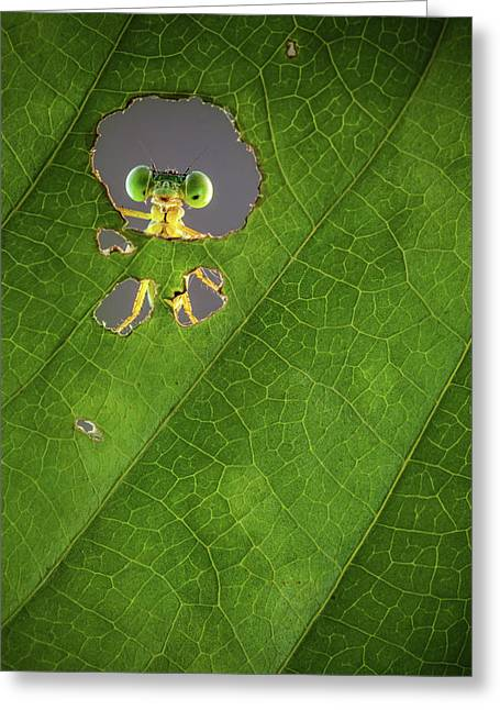 Nature Frame Greeting Card by Wilianto