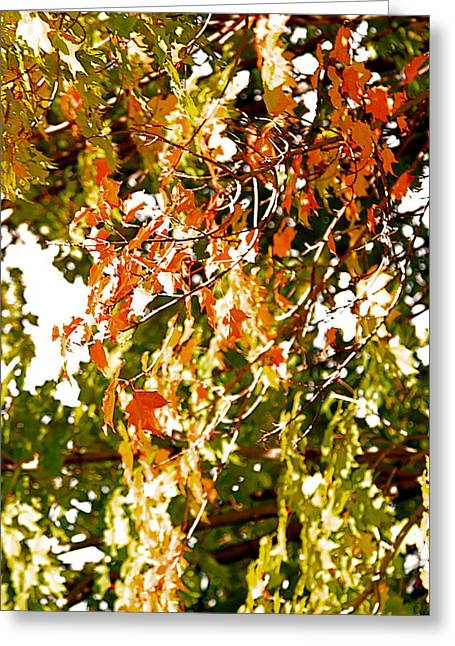 Nature In The City Greeting Card by Jocelyne Choquette