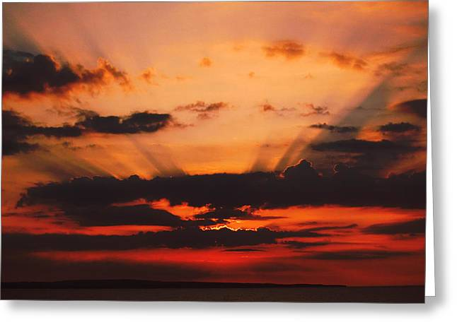 Nature Light Show Greeting Card by Tony Reddington