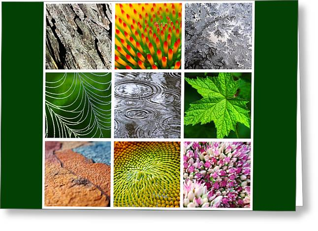 Nature Patterns And Textures Square Collage Greeting Card by Christina Rollo