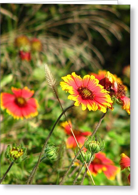 Nature Greeting Card by Peggy Burley
