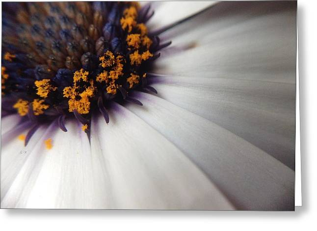 Greeting Card featuring the photograph Nature Photography 5 by Gabriella Weninger - David