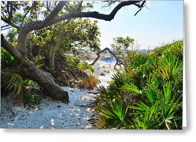 Nature Trail Greeting Card by Winston Hudson