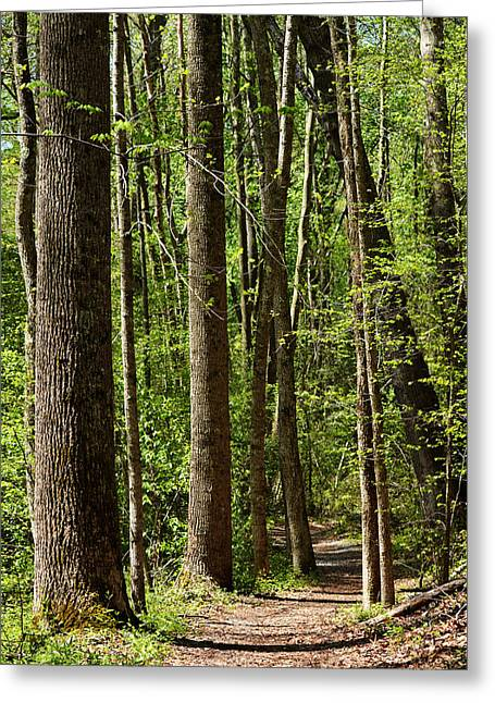 Nature Walk Early Spring Greeting Card
