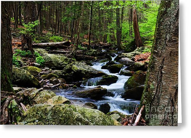 Nature Walk Greeting Card by Paul Ward
