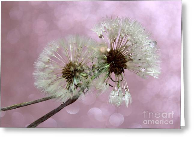 Nature Wish Greeting Card by Krissy Katsimbras