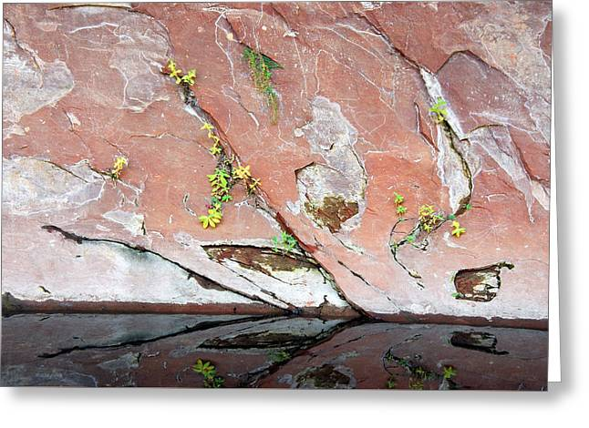 Nature's Abstract Greeting Card