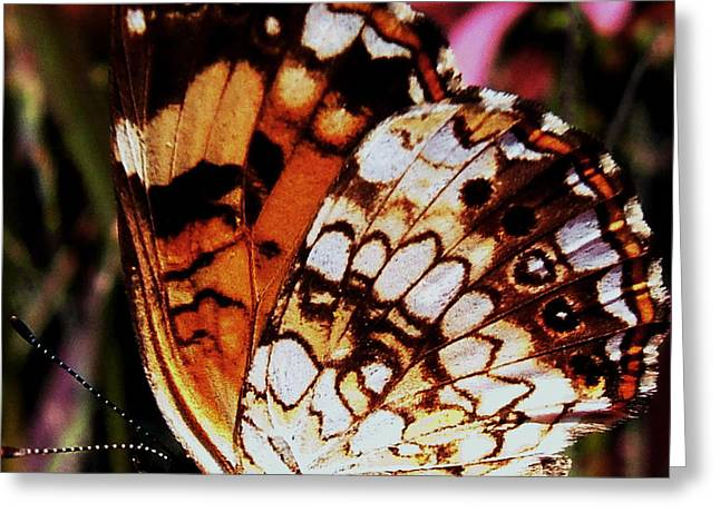 Natures Abstracts Butterfly Wings 005 Greeting Card by George Bostian