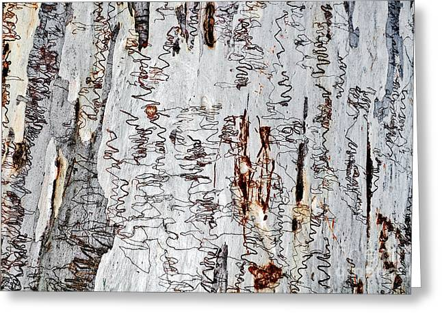 Nature's Art - The Scribbly Gum Greeting Card