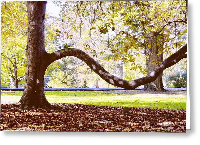 Nature's Bench Greeting Card by JAMART Photography