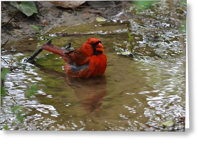 Natures Bird Bath Greeting Card by Joe Bledsoe