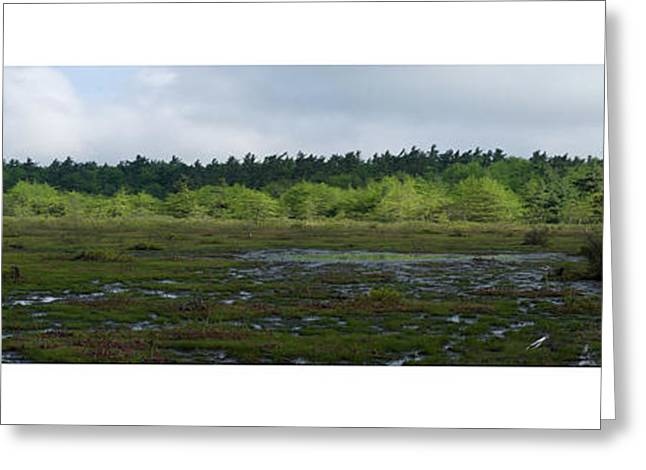 Greeting Card featuring the photograph Nature's Bog Lan 431 by G L Sarti