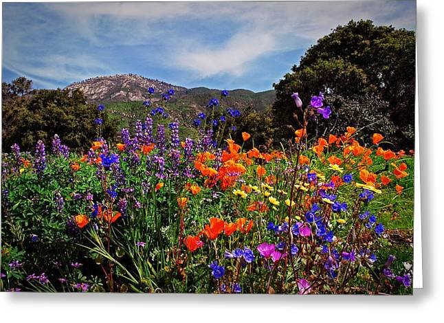 Nature's Bouquet  Greeting Card by Lynn Bauer