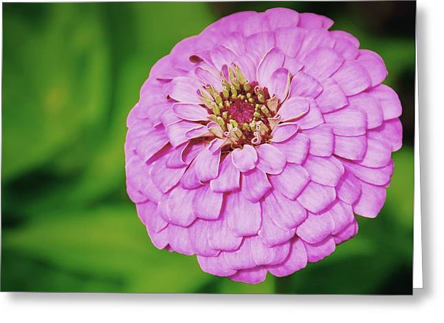 Nature's Boutonniere Greeting Card by JAMART Photography