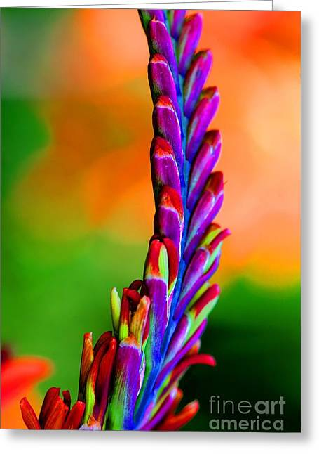 Nature's Colors Greeting Card by Tap On Photo