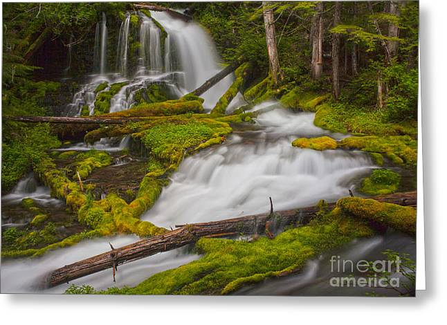 Natures Course Through Moss Greeting Card