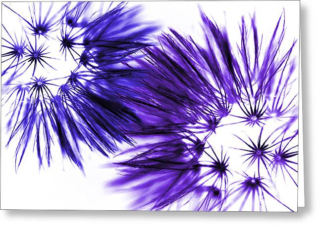 Natures Dance I Greeting Card by Natalie Kinnear