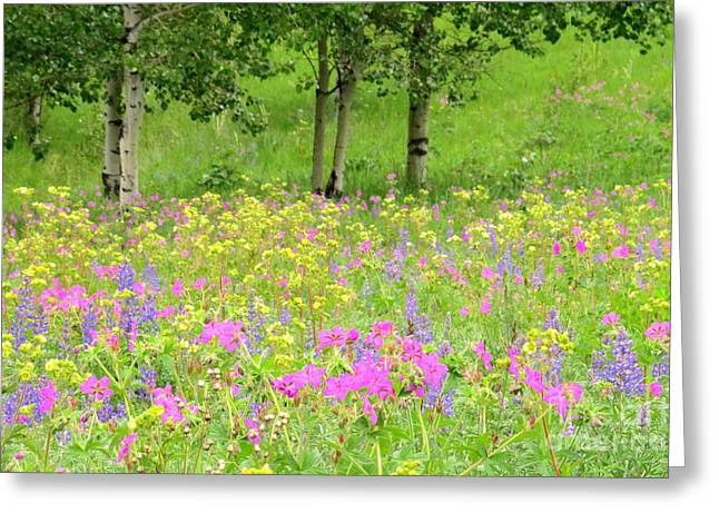 Nature's Display Greeting Card by Frank Townsley