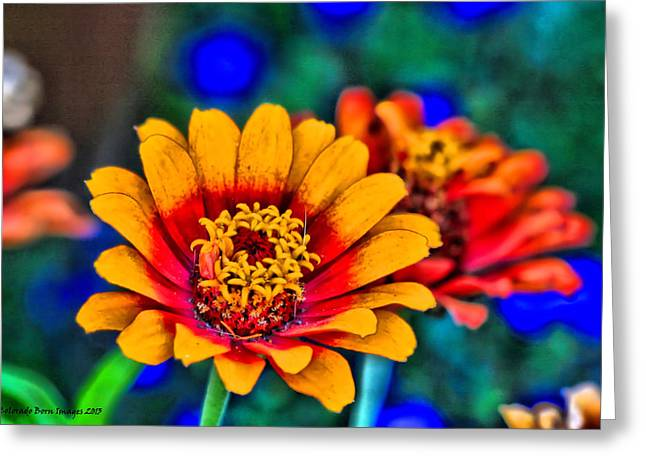 Natures Eye Candy Greeting Card by Rebecca Adams