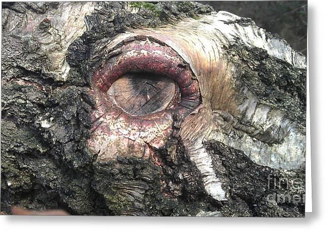 Natures Eye  Greeting Card by Tom Salt