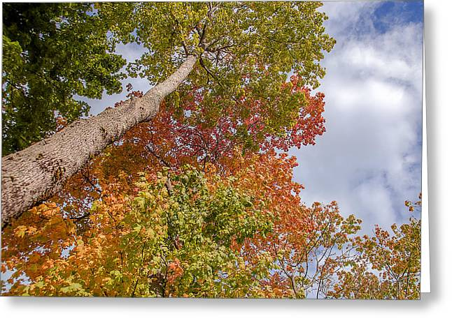 Natures Fall Colors Greeting Card by Julie Palencia