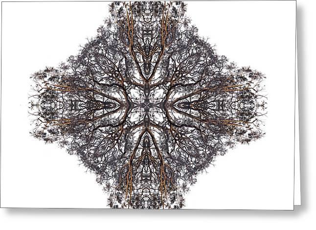 Nature's Filigree Greeting Card by Debra and Dave Vanderlaan