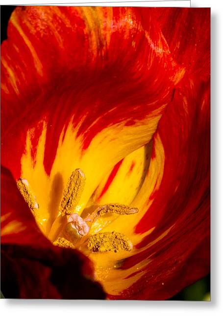 Nature's Flame Greeting Card by Paula Ponath
