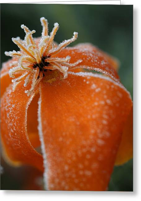 Natures Frost Greeting Card by Miguel Winterpacht