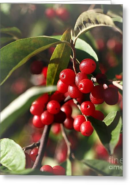 Greeting Card featuring the photograph Natures Gift Of Red Berries by Jeremy Hayden