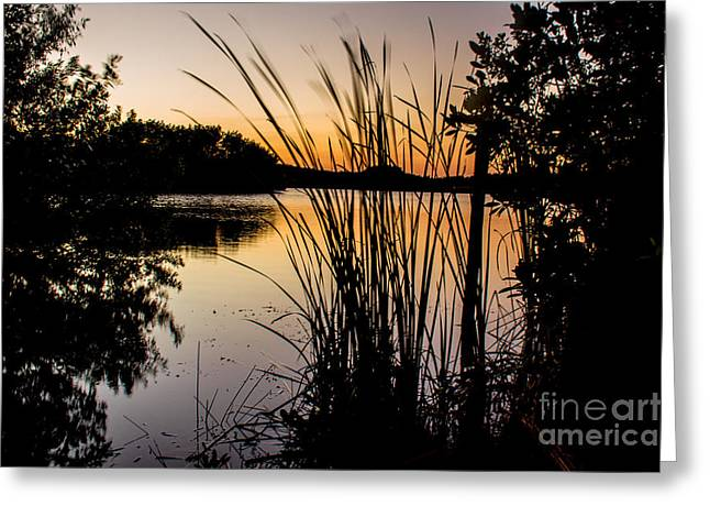 Natures Hidden Beauty Greeting Card by Rene Triay Photography