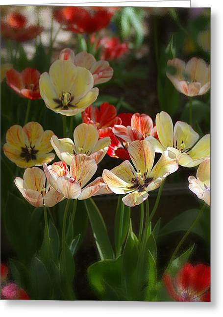 Greeting Card featuring the photograph Natures Joy by Randy Pollard