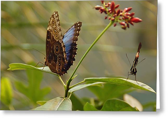 Natures Love Greeting Card by Aimee L Maher Photography and Art Visit ALMGallerydotcom