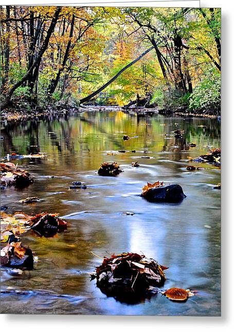 Natures Mood Lighting Greeting Card by Frozen in Time Fine Art Photography