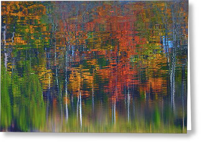 Nature's Paint Brush Greeting Card by Gary Hall