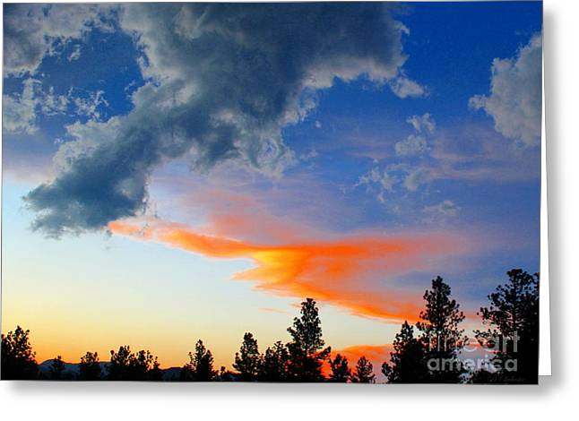 Nature's Palette Greeting Card by Barbara Chichester