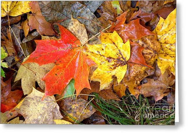 Greeting Card featuring the photograph Nature's Palette by Jim McCain