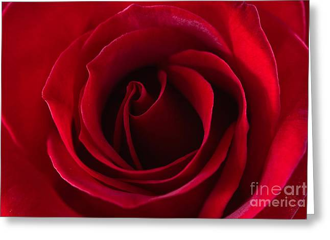 Natures Perfection All Proceeds Go To Hospice Of The Calumet Area Greeting Card