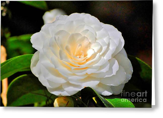 Natures Perfection Greeting Card by Kathy Baccari