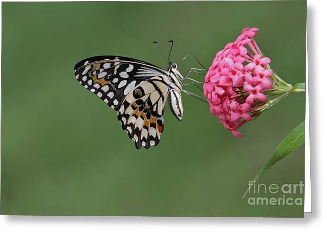 Natures Perfections Greeting Card by Gary Bridger