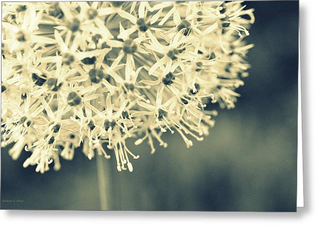 Nature's Popcorn Ball Greeting Card