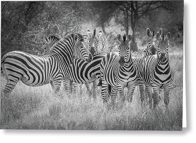 Nature's Referees Greeting Card