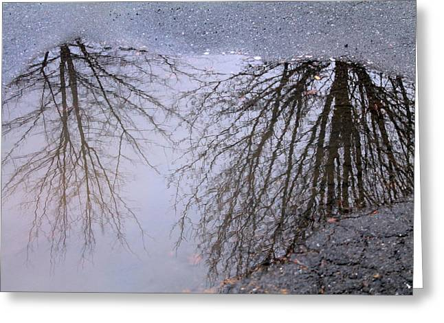 Greeting Card featuring the photograph Nature's Reflection  by Candice Trimble