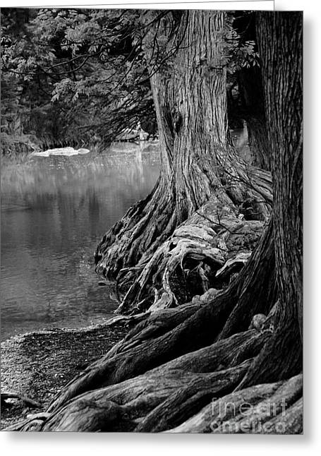 Natures Roots Greeting Card