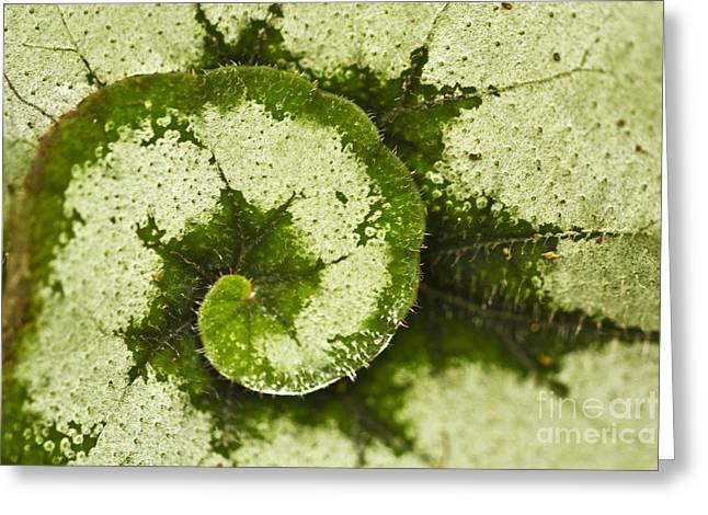 Natures Spiral Greeting Card