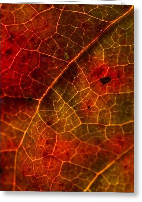 Greeting Card featuring the photograph Nature's Stained Glass by Julie Clements