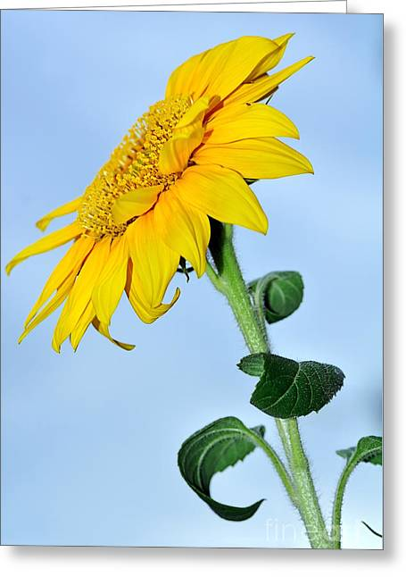 Nature's Sunshine Greeting Card