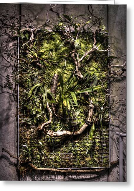 Natures Wall Greeting Card by Diego Re