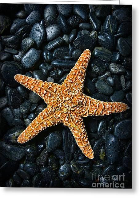 Nautical - Starfish On Black Rocks Greeting Card